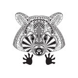 Raccoon style are observed. Royalty Free Stock Images