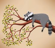 Raccoon on the tree. Illustration of cute raccoon taking a rest on the tree Royalty Free Stock Photography