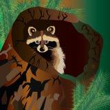 Raccoon vector cute wild wildlife animal Stock Photography
