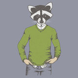 Raccoon vector illustration Royalty Free Stock Images