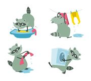 Raccoon washes a kidswear set. Set of raccoons washes a kidswear vector cartoons in flat style Royalty Free Stock Photos