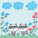 Raccoon zen star flower Stock Images