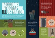 Raccoons illustration. Royalty Free Stock Photo
