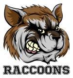 Raccoons Mascot Royalty Free Stock Photography