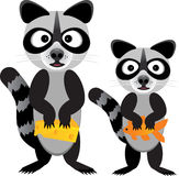 Raccoons stealing food Royalty Free Stock Photography