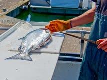Raccordo di color salmone fresco immagine stock libera da diritti