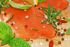 Raccordo di color salmone fresco Fotografia Stock Libera da Diritti