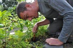 Raccords en caoutchouc de cultivation Photo libre de droits