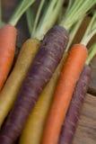 Raccords en caoutchouc multicolores Image libre de droits