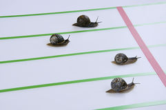 Race of big escargots. Royalty Free Stock Image