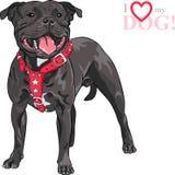 Race de bull-terrier du Staffordshire de chien de croquis de vecteur Images libres de droits