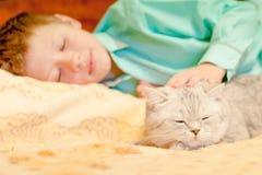 Race de chat les Anglais Shorthair avec un garçon Photos libres de droits
