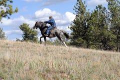 Race de cheval sauvage de conduite de résistance Photos libres de droits