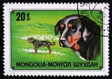 Race de chien de berger, vers 1978 Photographie stock