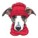 Race de chien de lévrier italien de vecteur illustration de vecteur