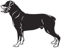 Race de chien de rottweiler illustration de vecteur