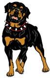 Race de chien de rottweiler Images libres de droits