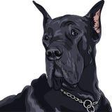 Race de great dane de noir de chien domestique de croquis de vecteur Photographie stock