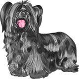 Race de Skye Terrier de chien de vecteur Photos libres de droits