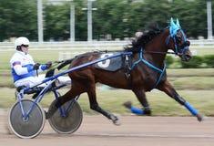 Race de trotteur de cheval dans la tache floue d'abrégé sur mouvement Images libres de droits