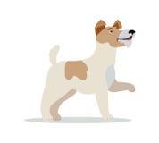 Race douce de chien de Fox Terrier sur le blanc illustration libre de droits
