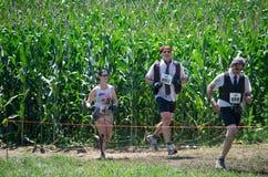 Race för affär Royaltyfri Foto