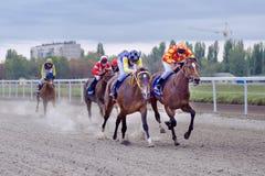 race för selehästhästar som rundar vänd tre Fotografering för Bildbyråer