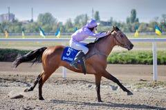 race för selehästhästar som rundar vänd tre Royaltyfri Fotografi