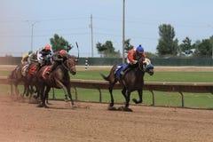 race för selehästhästar som rundar vänd tre Arkivfoto