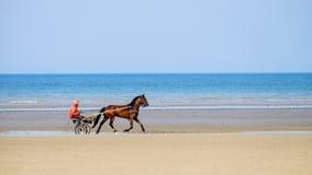 race för selehästhästar som rundar vänd tre Arkivbilder