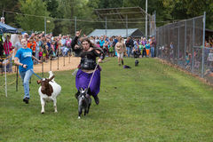 Race the Goat in Community Park Royalty Free Stock Photography