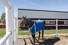 Race horse. At Momarkedet horse track in Mysen Norway Stock Photo