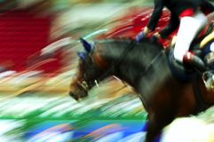 Race horse Royalty Free Stock Photos