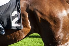 Race horse back Royalty Free Stock Image