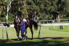 Race Horse Groom Royalty Free Stock Image