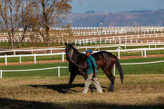 Race Horse Groom Training Track Exercise Stock Image