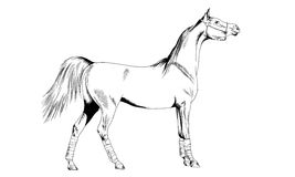 Race horse without a harness drawn in ink by hand on white background. In full length Royalty Free Stock Image