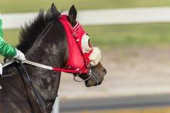 Race Horse Head. Blinkers closeup track portrait Stock Photo