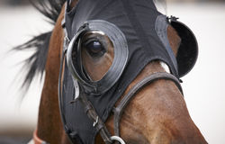 Race horse head with blinkers detail. Horizontal Stock Images
