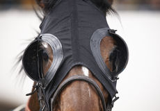 Race horse head with blinkers detail. Horizontal Stock Photo