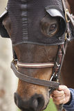 Race horse head with blinkers. Paddock area. Vertical Royalty Free Stock Photo