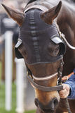 Race horse head with blinkers . Paddock area. Vertical Royalty Free Stock Photo