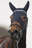 Race horse head with blinkers after the race. Paddock. Vertical Stock Photography