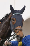 Race horse head with blinkers after the race. Paddock. Vertical Stock Images