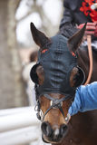 Race horse head with blinkers ready to run. Paddock area. Vertical Stock Images