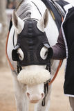 Race horse head detail with blinkers. Paddock area. Vertical Stock Images
