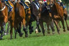 Race Horses Running Legs Hoofs Track Close Up. Race horses running action close up animal bodies legs hoofs pounding on grass track stock photos