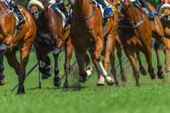 Race Horses Running Legs Hoofs Track Close Up. Race horses running action close up animal bodies legs hoofs pounding on grass track royalty free stock photo