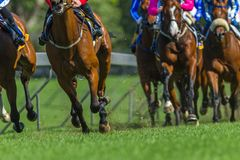Race Horses Running Legs Hoofs Track Close Up. Race horses running action close up animal bodies legs hoofs pounding on grass track royalty free stock photography
