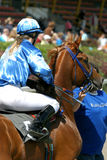 Race-horse and jockey. Right before take-off Stock Image